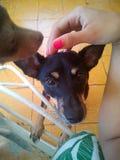 Cane - perros Fotografie Stock Libere da Diritti