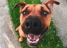 Cane più divertente su terra fotografia stock libera da diritti