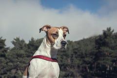 Cane piacevole che gode di una passeggiata nel bosco fotografie stock