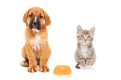 Cane piccolo e gatto che esaminano macchina fotografica Fotografie Stock