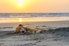 Cane pigro che si rilassa e che dorme sulla spiaggia di sabbia Fotografia Stock
