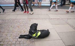 Cane poliziotto nero che si trova sul rilassamento al suolo Il cane ha un cablaggio che dice la polizia - gli esplosivi cercano i immagini stock