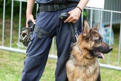 Cane poliziotto Poliziotto con un pastore tedesco in servizio Fotografie Stock