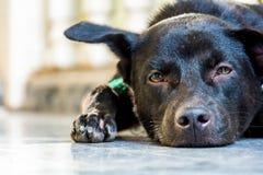 cane posteriore seduto Immagine Stock Libera da Diritti