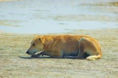 Cane randagio che appende intorno sulla spiaggia che gode dell'acqua Fotografia Stock Libera da Diritti