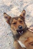 Cane randagio felice nella sabbia Immagine Stock