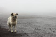 Cane randagio senza tetto che aspetta sulla strada Fotografie Stock Libere da Diritti
