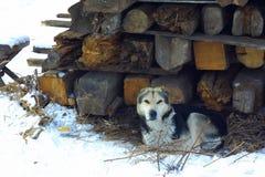 Cane randagio sulle rovine della casa immagini stock libere da diritti