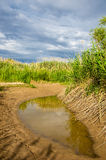 Cane, reed, rush, thatch, frail. Reeds growing along the road. Kazakhstan. Altyn Emel National Park Stock Image