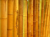 Cane. Row upon row of bamboo cane background Royalty Free Stock Photography
