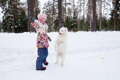Cane samoiedo con una ragazza Immagine Stock