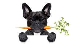 Cane sano dell'alimento immagine stock
