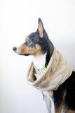 Cane in sciarpa, venuta di autunno Immagini Stock Libere da Diritti
