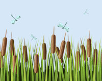 Cane. Seamless texture with image of reeds and dragonflies Royalty Free Stock Photos
