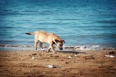 Cane senza casa Immagine Stock