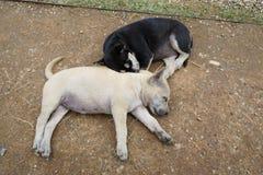 Cane senza tetto, colore in bianco e nero del cane che dorme sulla sabbia immagine stock libera da diritti
