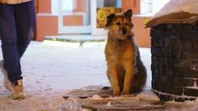 Cane senza tetto della povera via che si siede sulla via durante il tempo nevoso tempestoso Passeggiata della gente dopo un cane stock footage