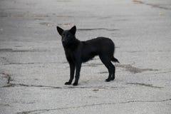 Cane senza tetto nero in un parco della città Immagine Stock