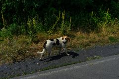 Cane senza tetto piacevole fotografia stock libera da diritti