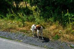 Cane senza tetto piacevole fotografia stock