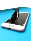 Cane senza tetto sullo smartphone Fotografie Stock