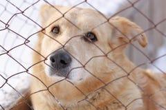 Cane senza tetto triste per la maglia metallica immagine stock