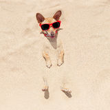 Cane sepolto in sabbia Fotografia Stock