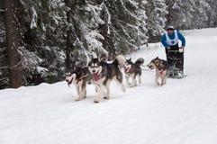 Cane-sledding Fotografia Stock Libera da Diritti