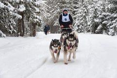 Cane-sledding con i husky Fotografia Stock