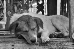 Cane sonnolento Fotografia Stock