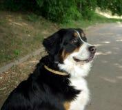 Cane in sosta immagini stock libere da diritti