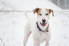 Cane sotto la neve Immagine Stock