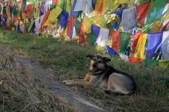 Cane sotto le bandiere di preghiera Immagine Stock Libera da Diritti