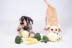 Cane su fondo bianco Fotografie Stock