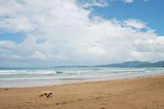 Cane su un litorale della spiaggia Immagini Stock Libere da Diritti