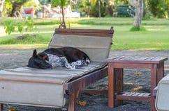 cane su una chaise-lounge della spiaggia Fotografia Stock