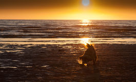 Cane su una spiaggia Fotografie Stock