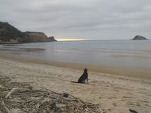 Cane su una spiaggia Immagine Stock
