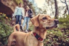 Cane su una traccia della foresta fotografie stock libere da diritti