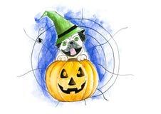 Cane su una zucca di Halloween, cappello d'uso del ` s della strega, backgro del carlino di web Fotografia Stock