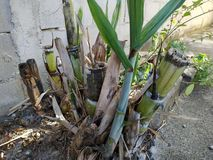 Cane Sugar Plant i Brasilien arkivbilder