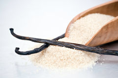 Cane Sugar and Vanilla Beans. Closeup of processed brown cane sugar in a wooden scoop and two vanilla beans or pods Royalty Free Stock Image