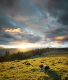 Cane sul pascolo della montagna durante il tramonto Fotografia Stock Libera da Diritti