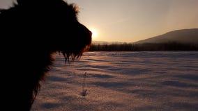 Cane sul tramonto in neve Immagine Stock Libera da Diritti