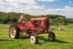 Cane sul trattore rosso d'annata nel paesaggio fotografia stock libera da diritti