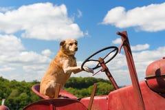 Cane sul trattore rosso d'annata nel paesaggio fotografia stock