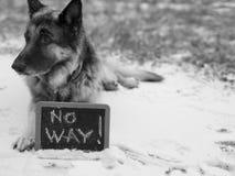 Cane sull'alta allerta Immagini Stock Libere da Diritti