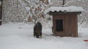 Cane sulla catena che mangia nella neve vicino alla fossa di scolo video d archivio