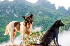 Cane sulla collina Fotografie Stock Libere da Diritti