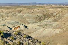 Cane sulla montagna nella vasta scena del paesaggio del deserto Immagine Stock